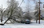 A downed tree in the Alameda neighborhood of Portland on Monday played havoc with electrical wires on the street, likely knocking out power to some homes.
