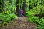A hiker walks through Tryon Creek State Park in Portland, Ore., Wednesday, May 6, 2020. Some Oregon state parks reopened for limited day use as the state eased restrictions initially put in place to slow the spread of COVID-19.