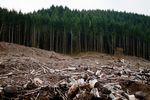 A clearcut left behind where an Oregon forest near Eugene was logged.
