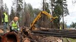 """In this edited image supplied by Cascadia Forest Defenders, a group of four people are seen in a post-fire logging area where organizers say they halted operations for an hour on Monday, protesting tree removal on Oregon Highway 126. Two people sat on decked logs while one person stood at the log loader, telling the operator to """"turn your machine off."""""""