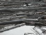 Log mat on Spirit Lake on Oct. 8, 2019. The 1980 eruption and the associated massive landslide deposited enormous amounts of floating woody debris onto Spirit Lake.