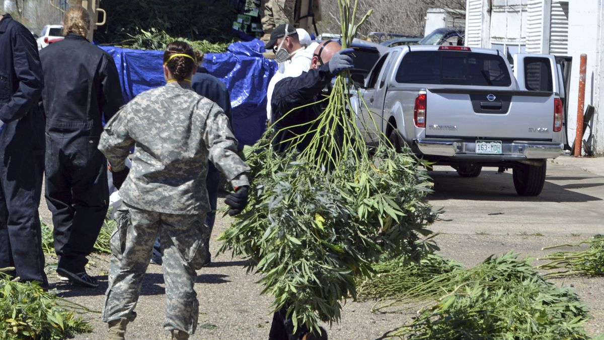 Overwhelmed by illegal cannabis, Oregon county declares emergency - OPB News