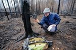 A person wearing outdoor gear crouches in a burned forest and holds a camera.