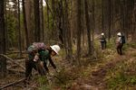 People wearing hard hats and outdoor gear clear forest debris from a trail in the woods.