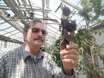 Jim Myers is the mastermind behind the gothic tomato. As a Horticulture Professor and vegetable breeder for Oregon State University, he developed the Midnight Roma by crossbreeding two other varieties also developed at OSU.