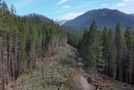 An aerial view of trees removed on a forest road near the Breitenbush River.
