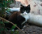 Boo is the Feral Cat Coalition's 100,000th neutered cat. He was helped on 07/19/19.