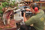 Bonsai artist Ryan Neil sculpts a tree with a chainsaw in his Bonsai Mirai workshop.