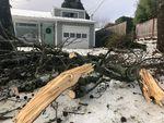Tree damage in Southeast Portland on Monday.