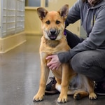 Paxton poses for a portrait at the Oregon Humane Society.