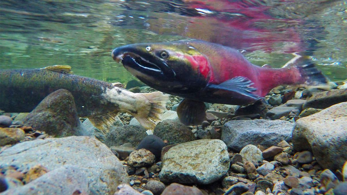 Eaglenest wildlife sanctuary trip report