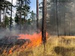Just like many Western forests, longleaf pine woodlands in the Southeast are adapted to regular fires, like this one in Georgia.
