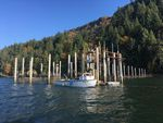 An experimental fish trap on the lower Columbia River has repurposed an old fishing method in search of a more sustainable way to catch salmon.