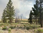 Smoke from the Bootleg Fire as it burns near the Nature Conservancy's Sycan Marsh Preserve.