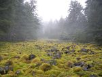 Moss covers talus slopes in the Columbia River Gorge before the Eagle Creek Fire