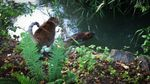 Jicama, the Harris's cat, watches a beaver in the creek behind their house in Tigard.