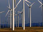 A field of windmills.