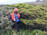 Brian Buma taking measurements along the intact edge of a large patch of trees on Isla Hornos, an island at the southern tip of South America.