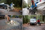 Clockwise from top left: Laura Maffei holds onto her Alaskan malamutes, Tai and Takara; Lou Wolf fastens her dog Jonny's harness; Kim Tinker connects her Alaskan huskies, from left, Ikuma, Summit and Raven to tug lines; Dale Leix's Alaskan husky, Taz, and black mouth cur, Bug, cool off and drink from a puddle.