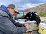 Gary Hess and his cattle dog, Buddy, have been at work so far in 2021 not just herding cows but selling off some of the herd, anticipating a bad year due to little rain and poor grass-growing conditions to feed the cows.