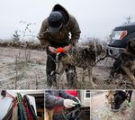 From top, clockwise: Tim Curley puts booties on one of his dogs; two of McCracken's dogs drink water; McCracken puts a harness on one of his dogs; harnesses hang from McCracken's dog box.