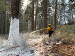 A firefighter with a hose sprays flame retardant on a tree, making it appear as though it was covered in white paint.
