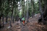 three hikers climb a steep trail surrounded by trees covered in moss down to the historical snowpack line