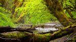 Coastal Forest, Oregon.