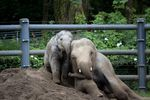 Lily was the youngest elephant at the Oregon Zoo. She died on Nov. 29, the day before her sixth birthday.