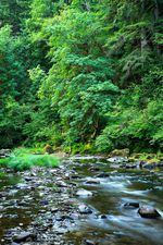 The West Fork Milicoma River is part of the tract of land within the Elliott State Forest that was sold to a private timber company in 2014.