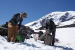 """Though they're called """"ice worms,"""" the creatures Scott Hotaling (right) and his colleagues study on the glaciers of Mount Rainier can't handle even the slightest bit of freezing. If temperatures dip even slightly below zero degrees Celsius (32 degrees Fahrenheit), Hotaling says, the worms die."""