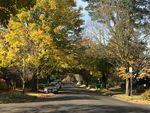 A tree canopy lining Portland's NE Knott Street on a late October day.