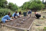 Service members plant cabbage and onions during FoodCorps training in Portland.