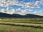 Mowed farmlands with mountains in the distance and white clouds in a blue sky.