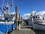 A lot of Oregon fishermen had docked their boats in Newport by April 3 because of low seafood prices and uncertain markets during the coronavirus pandemic.