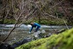 Research fish biologist Brooke Penaluna collects water samples from the Santiam River's south fork east of Cascadia, Ore., Wednesday, March 10, 2021.