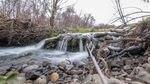 Sampai Suku Konfederasi dari Umatilla Indian Reservation membeli tanah ini di dekat Pendleton, sungai mengalir lebih cepat dan lebih langsung. Berang-berang membantu membuat saluran samping yang memperlambat air dan mengubahnya menjadi lahan basah terbesar di Cekungan Umatilla.