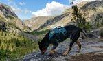 Ein Hund in der Wildnis hält inne, um an einem Felsen zu schnüffeln.