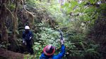 As the field crew bushwhacks through the dense coastal forest, they stop periodically to scan the canopy with an antenna, hoping to hear the beep that would signal the murrelet's radio transmitter tag is nearby.