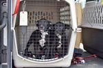 Nadine and Nelson wait for their fur-ever home.