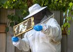 Hedgmon inspects the honey in a honeycomb frame from her backyard beehive in Northeast Portland, July 19, 2021. Hedgmon, the founder of The Barreled Bee, produces handcrafted, small-batch, barrel-aged honey.
